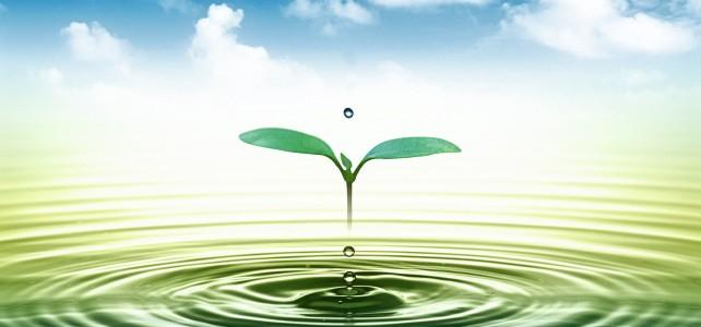 Mẫu báo cáo giám sát môi trường định kỳ